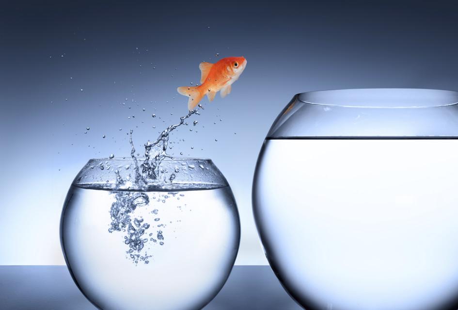 Goldfish+Jumping+Bowls+-+iStock_000035745850_XXXLarge